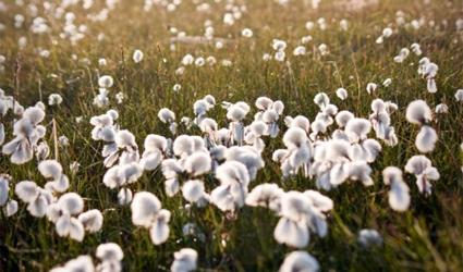 moda sostenibile, tessuti ecologici, valore sostenibile,