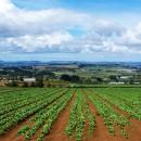 agricoltura sostenibile, green economy