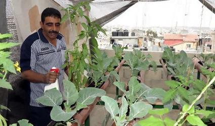agricoltura urbana, palestina