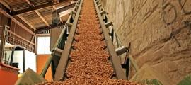 energia da biomassa, monitoring biomassa, biomassa, biomassa cnr