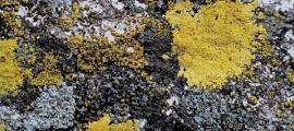 cemento biologico