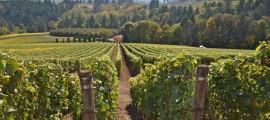 forum-sostenibilità-ambientale-vino