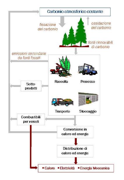biomasse, biomasse legna, biomasse bosco
