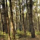 biomasse bosco