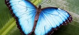 Biomimesi-farfalla