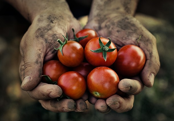 agricoltura 2.0, agricoltura open data, open data agricoltura, agricoltura sicurezza alimentare