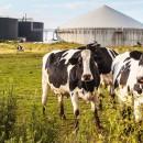 biogas,-impianti-biogas,-energie-rinnovabili