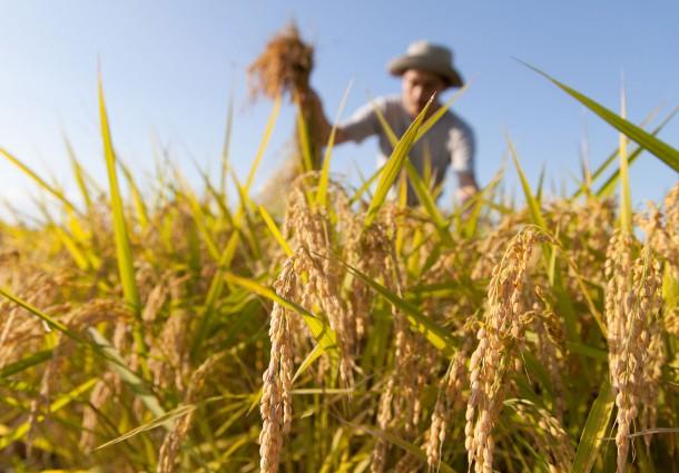 Terre Originali, Giovani Imprenditori Agricoli