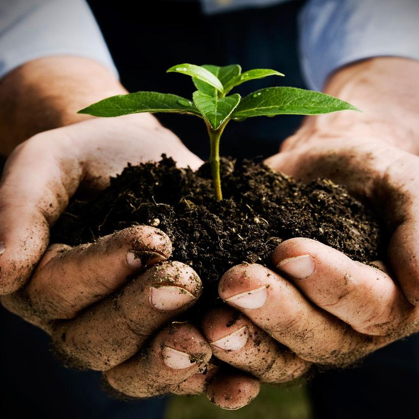 Bando Terre Originali, Agricoltura Sostenibile