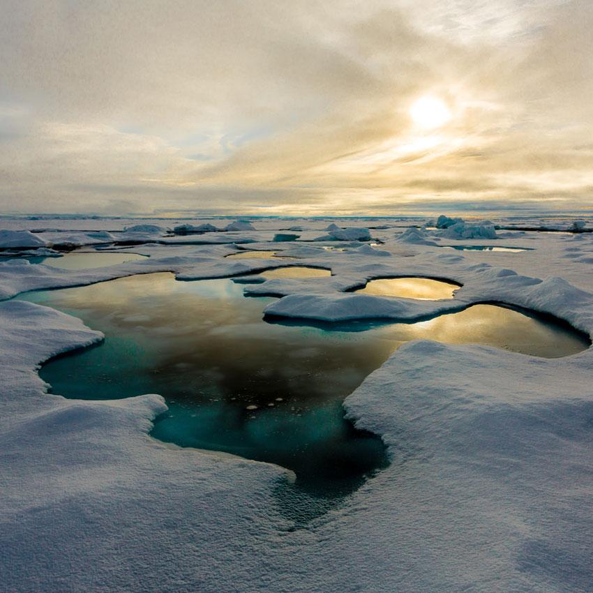 Oscillazione Artica, Ecosistema Pelagico