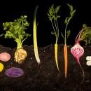 Food Print: costo ambientale della produzione degli alimenti