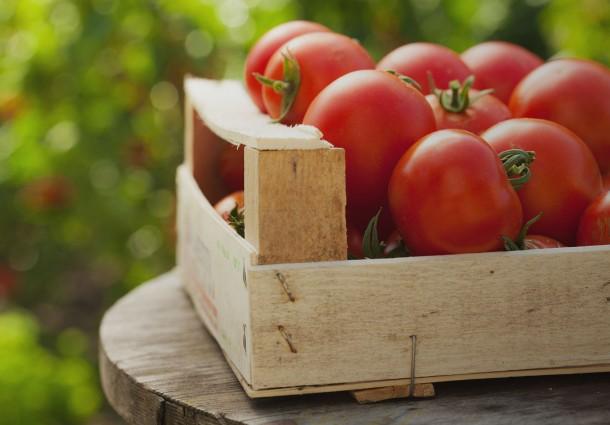 Pomodori a Rischio Causa Alte Temperature