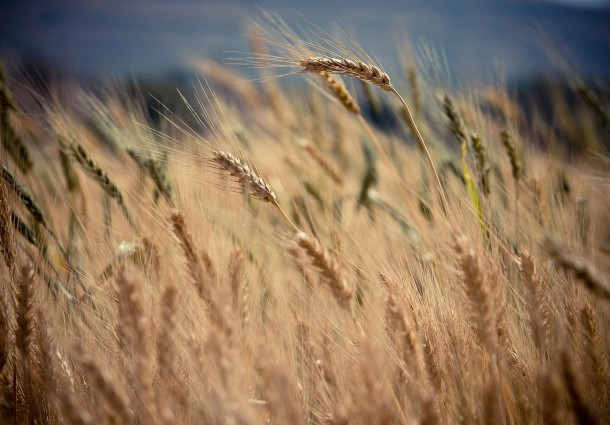 Economia Circolare Applicata all'Agricoltura