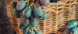 Biodiesel dagli Scarti dell'Uva