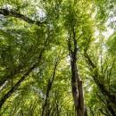 """Ospedali """"Green"""": Carbon Sink per Compensare le Emissioni della Carta Asciugamani"""