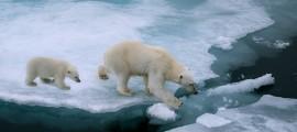 La Conferenza sul Clima di Parigi e le promesse sul cambiamento climatico