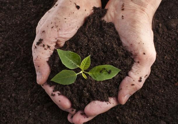 Il ruolo del compost nella difesa del suolo