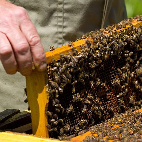 Bee my future: adottare un'arnia per salvaguardare la sicurezza alimentare