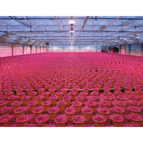 Nuove opportunità per i LED – Vertical Farming