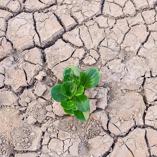 Green Economy Report: la Gestione dei RAEE nella Lotta al Cambiamento Climatico