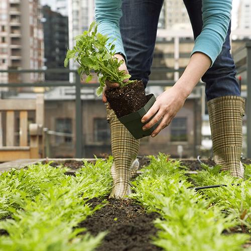 Scuola: i tetti diventano giardini. La lezione di agronomia è outdoor