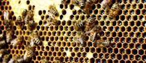 Bee my Future: adotta le api e ricevi energia pulita