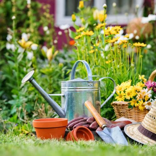 Giardinaggio sostenibile: il robot per la manutenzione del giardino piace