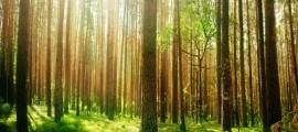 Biomasse solide: pilastro dell'economia circolare