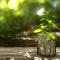 Investire Nella Green Economy - Opportunità E Responsabilità