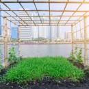 Nasce Città d'Orti, il progetto comune di LifeGate, Slow Food Italia e Comart