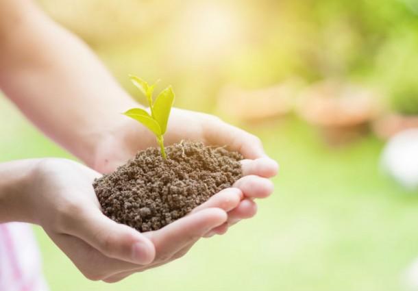 """Confagricoltura:""""L'impegno di agricoltura e forestazione per fronteggiare i cambiamenti climatici"""