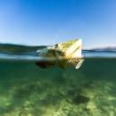 Plastica in mare: salpa il veliero di Expédition MED