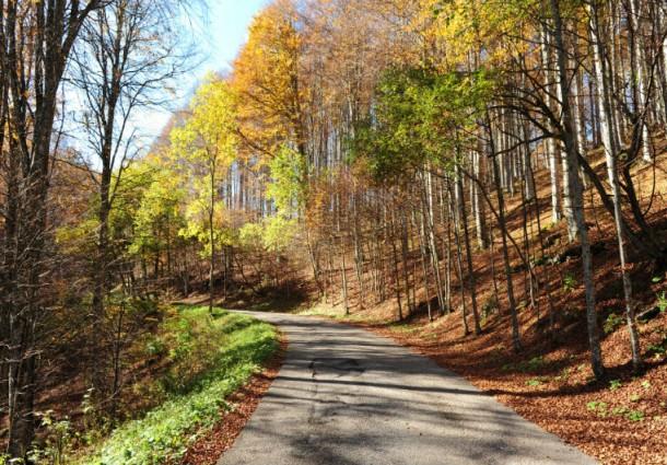 La bioeconomia delle foreste