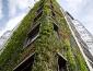 giardini_verticali_patrick_blanc_giardino_verticale_giardiniere_verticale_giardino_verticale_1