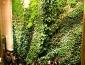 giardini_verticali_patrick_blanc_giardino_verticale_giardiniere_verticale_giardino_verticale_5