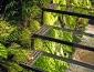 giardini_verticali_patrick_blanc_giardino_verticale_giardiniere_verticale_giardino_verticale_6